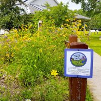 Native plants restoration at Osprey Wilds