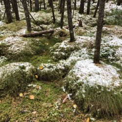 Sphagnum moss bog